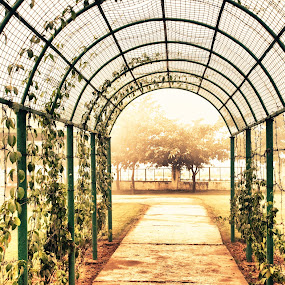 cage in the park by Infected Gallery - Landscapes Forests ( public park, structure, park, nature, green, plants, path, cage, perspective, entrance,  )