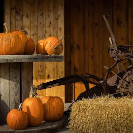 Pumpkin patch find by Eric Wellman - Public Holidays Halloween ( holiday, fall, pumpkins, hay bale,  )