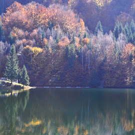 October by Neli Dan - Landscapes Waterscapes ( light, october, autumn, lake, morning )