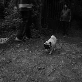 by Amit Sakhare - Animals - Dogs Running (  )