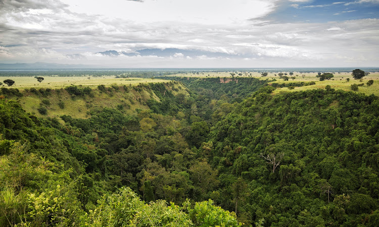 Kyambura Gorge also know as the 'Valley of Apes' is in the far eastern corner of the Queen Elizabeth National Park