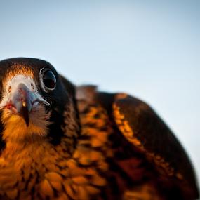 by Darren Tan - Animals Birds