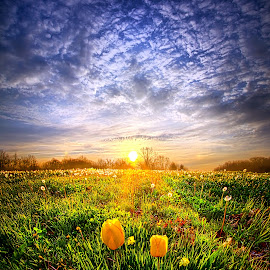 Two Lips that Touch at Dawn by Phil Koch - Landscapes Prairies, Meadows & Fields ( art, tulips, landscape, spring, sun, shadows, field, life, weather, perspective, lines, horizons, sunrise, flowers, light, garden,  )