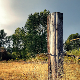 lone pole by Todd Reynolds - Artistic Objects Still Life
