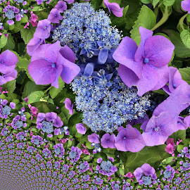 abstract flower by Paul Wante - Digital Art Abstract ( blue, abstract, phottography, flower, digital art )