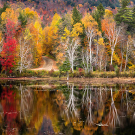 Autumn Bliss by Bob Ellis - Landscapes Forests ( fall_leaves, new_york, trees, travel, landscape )