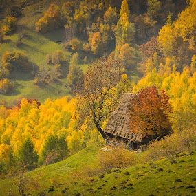Autumn rhapsody by Lucian Satmarean - Landscapes Forests