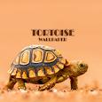 Tortoise Animal Wallpaper