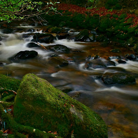 In the forest by Nik Hall - Landscapes Forests ( stream, ireland, killarney, forest floor, long exposure, forest, longexposure, river )