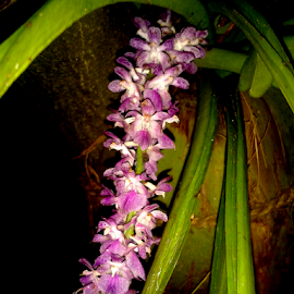 Orchid #1 by Angkana Bharadwaj - Instagram & Mobile Android