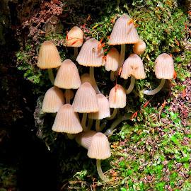 Mushrooms by Mārīte Ramša - Nature Up Close Mushrooms & Fungi