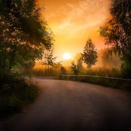 First light by Johan Lennartsson - Landscapes Sunsets & Sunrises ( warm, fog, summer, sunrise, golden, sun, mist,  )