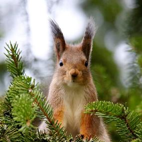 by Teija Kukkonen - Animals Other Mammals
