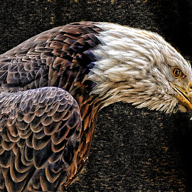 by John Larson - Digital Art Animals
