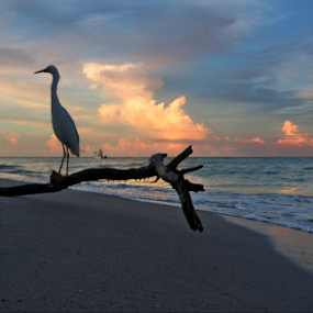 Longboat Key Florida by Jeremy Barton - Landscapes Beaches ( clouds, sky, florida, longboat key, gulf of mexico, beach, usa, egret, beer can island )
