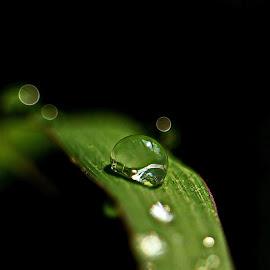 Tiny fresh by Dody Mawardi - Nature Up Close Leaves & Grasses ( water, macro, nature, drop, dew,  )