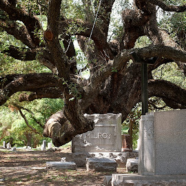 Tree Hugger by Karla Hernandez - Novices Only Objects & Still Life