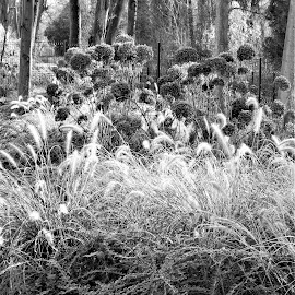 mélanges d'herbes by Nathalie Coget - Black & White Flowers & Plants