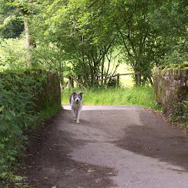 Old stone bridge by Jenny Noraika - Animals - Dogs Running ( green, stone, bridge, dog, shadows )
