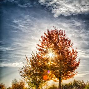 At my home (Hannover / Germany) by Kai Buddensiek - Nature Up Close Trees & Bushes ( herbst, hannover, home, landschaft, hdr, autumn, 24-105, kronsberg, landscape )