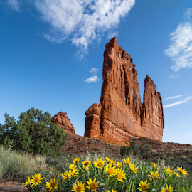 Flowers and Rock by Phyllis Plotkin - Landscapes Caves & Formations ( clouds, arches national park., rock formation, landscape, flowers )