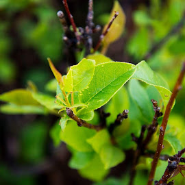 Spring Time by Heather Link - Nature Up Close Leaves & Grasses ( green, leaf )