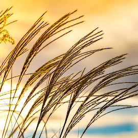 In the Wind by Mark Ritter - Nature Up Close Leaves & Grasses ( clouds, grasses, wind, macro, sunset, sun, closeup )