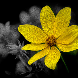 Yellow by Greg Bennett - Digital Art Things ( carlyle lake, flower garden, black and white, green, digital art, oil pai, il, yellow, filter, flower )