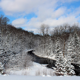 Winter On The Potato River, Upson, WI by Robert C. Walker - Landscapes Forests ( water, blue sky, sky, winter, cold, snow, trees, forest, river )