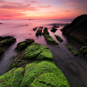 Mossy mossy by Christianto Mogolid - Landscapes Sunsets & Sunrises ( green moss, sunset, background, moss, rock formation,  )
