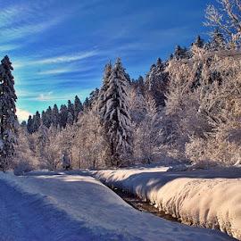 by Zoran Konestabo - Nature Up Close Trees & Bushes
