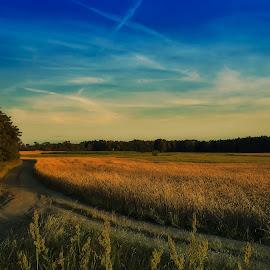 July evening   by Tomasz Marciniak - Landscapes Prairies, Meadows & Fields ( summer, evening, fields )