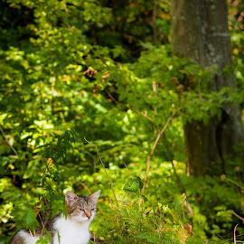 by Mihai Bancila - Animals - Cats Kittens (  )