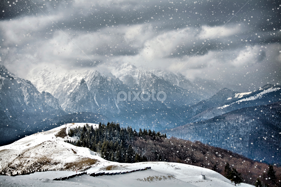 Snow by Daliana Pacuraru - Landscapes Weather ( daliana pacuraru, pwcfoulweather, snow, white, snowflakes, weather,  )