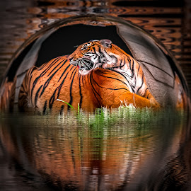 Bubble Cage by Ron Meyers - Digital Art Animals