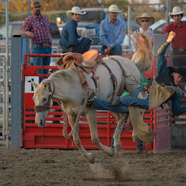 Mama don't let your sons be Cowboys by Dennis McClintock - Sports & Fitness Rodeo/Bull Riding ( cowboy, rodeo, county fair, bucking horse )