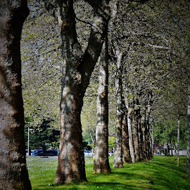 spring trees by Lavonne Ripley - Nature Up Close Trees & Bushes