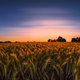 by Michael Böckling - Landscapes Prairies, Meadows & Fields