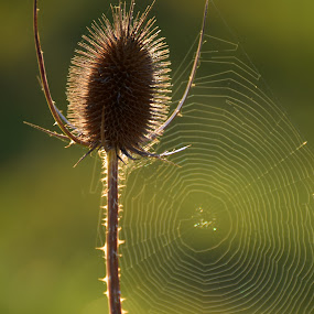 First Sunrays Of The Day by Marco Bertamé - Nature Up Close Other Natural Objects (  )