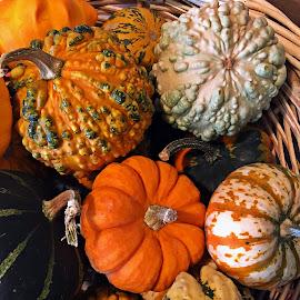 Dovleci by Dobrin Anca - Food & Drink Fruits & Vegetables ( green, pumpkins, brittany, table, garden )