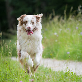 by Crazy  Photos - Animals - Dogs Running