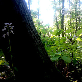 Green by Indrana Indra - Landscapes Travel