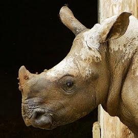 RINO.... by JORGE JACINTO - Animals Other ( animal )