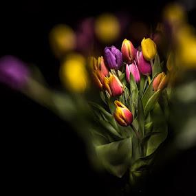'Tulips in Watercan' by Mick Brinkmann - Flowers Flower Arangements ( abstract, color, lightpainting, tulips, flowers,  )