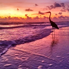 { The Observer ~ Sunset Beach ~ 30 July }  by Jeffrey Lee - Landscapes Sunsets & Sunrises ( { the observer ~ sunset beach ~ 30 july } )