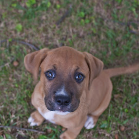 Angel Puppy  by Katie Woolwine - Novices Only Pets