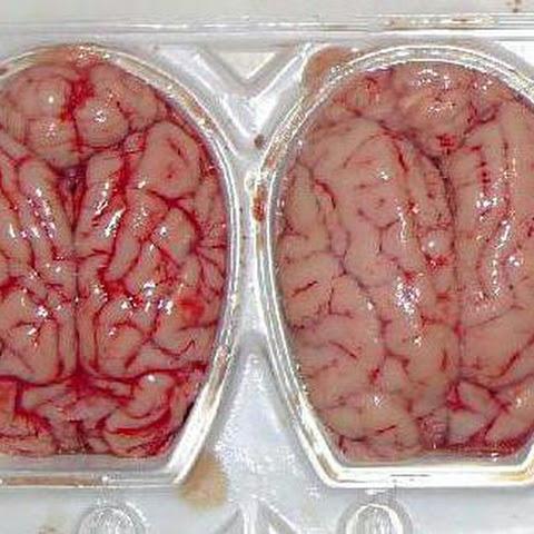 Food that enhances brain function