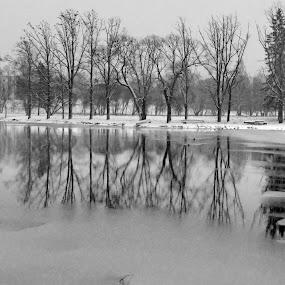 Winter near the castle by Zenonas Meškauskas - Landscapes Waterscapes ( winter, trees, reflections, lake, castle )