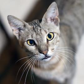 by Veli Toluay - Animals - Cats Portraits (  )