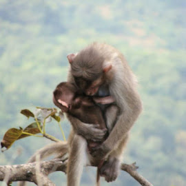 mom is always mom by Mandar Govande - Animals Other